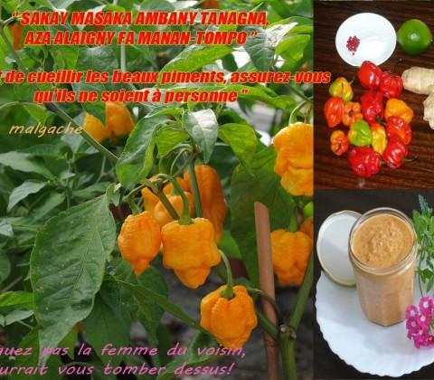 La pâte de piment à la malgache