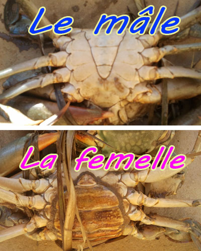 Crabe au Lait de coco