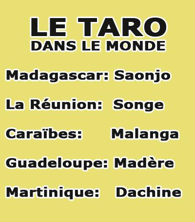 Taro dans le monde tropical